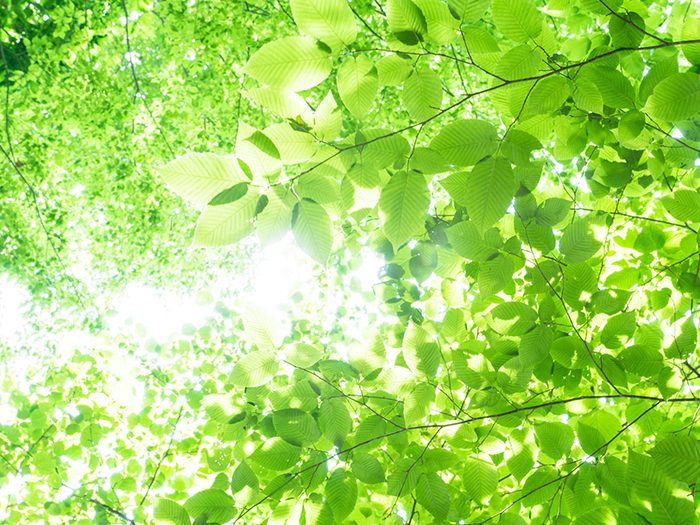 太陽光が透ける木々